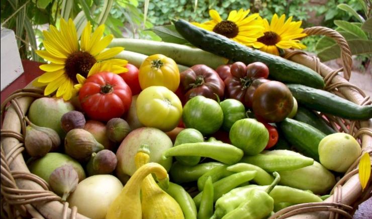 Família americana produz alimentos no quintal de casa e faz sucesso nas redes sociais 6